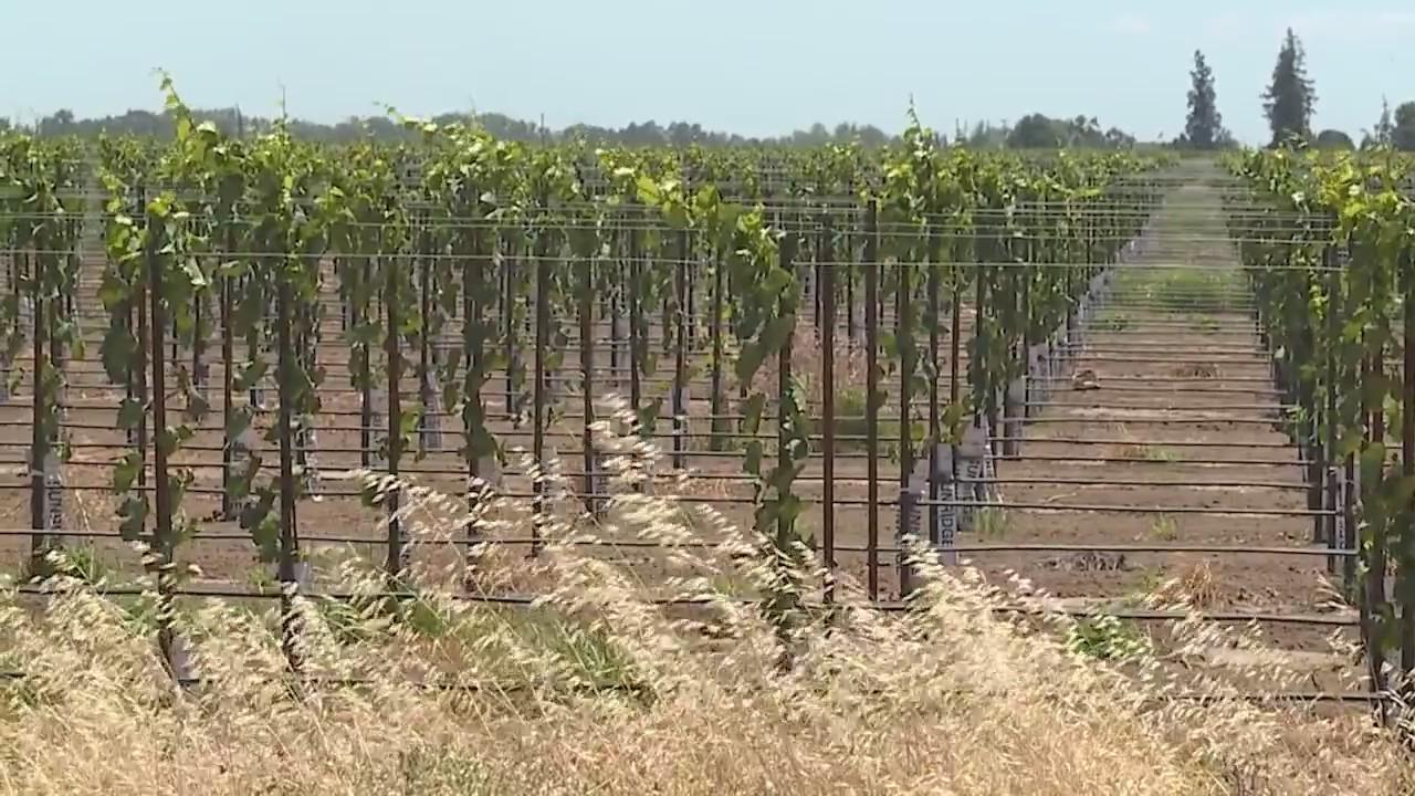 UC Davis works to help wine industry overcome drought conditions