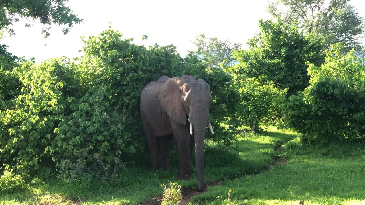 Staying cool in this close encounter with an inquisitive elephant was no easy TUSK