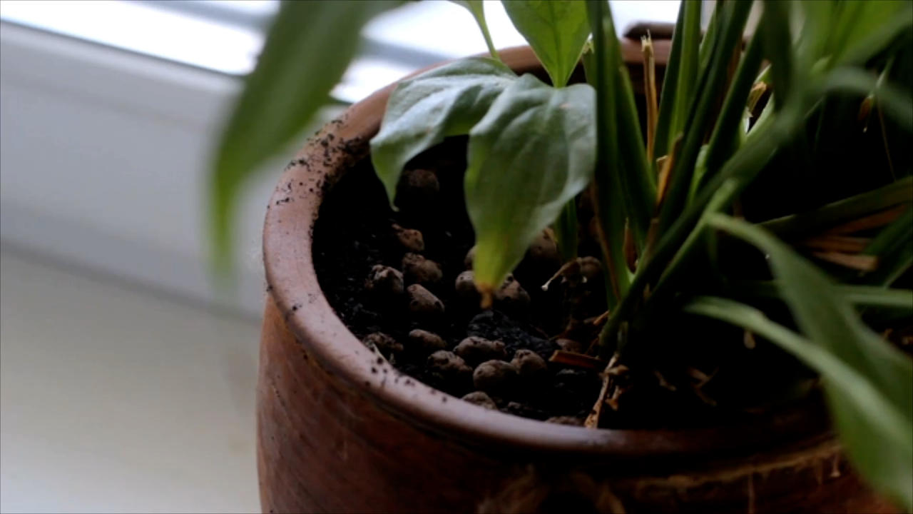 3 Ways to Keep Houseplants Alive While Away on Vacation