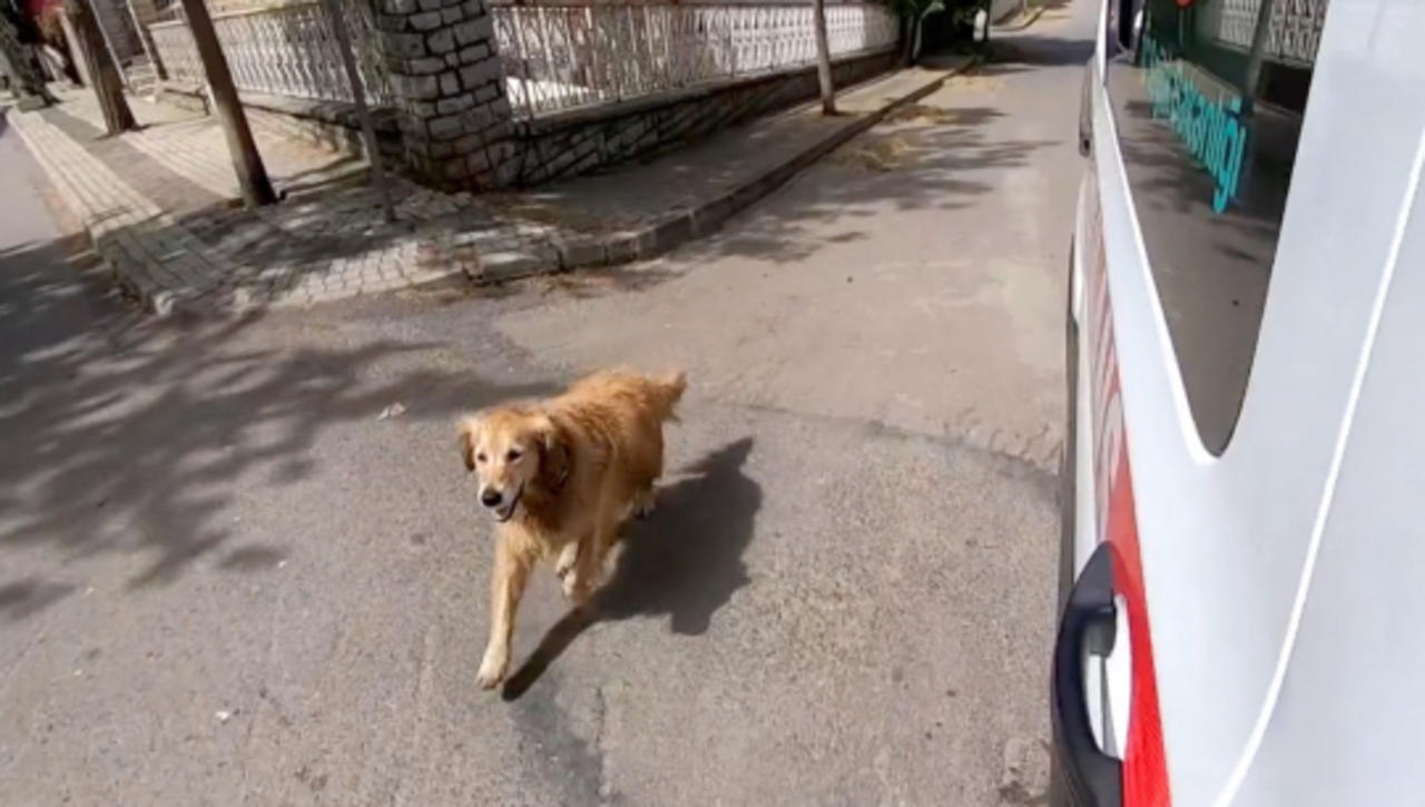 Footage of Dog Running After Ambulance With Owner Inside Will Move You to the Core