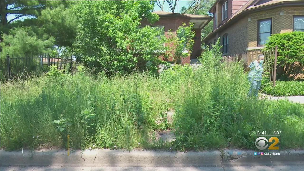 Neighbors Infuriated By Overgrown, Hazardous Vacant Property In Morgan Park; Company That Took It Over Never Paid Fines