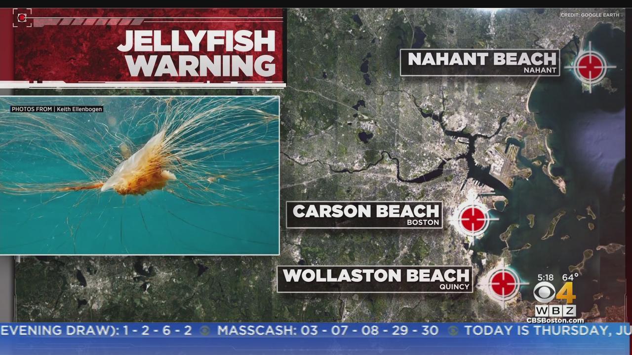 Jellyfish Warning At Massachusetts Beaches