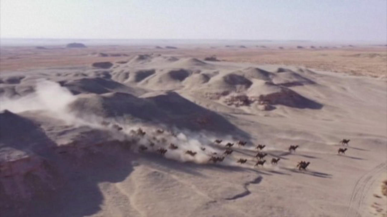 Stampede of Wild Camels Caught on Video in Chinese Nature Reserve!
