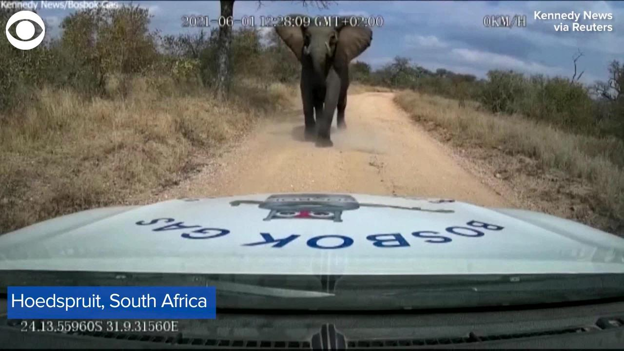 WEB EXTRA: Dash Cam Video Shows Elephant Charging At Truck
