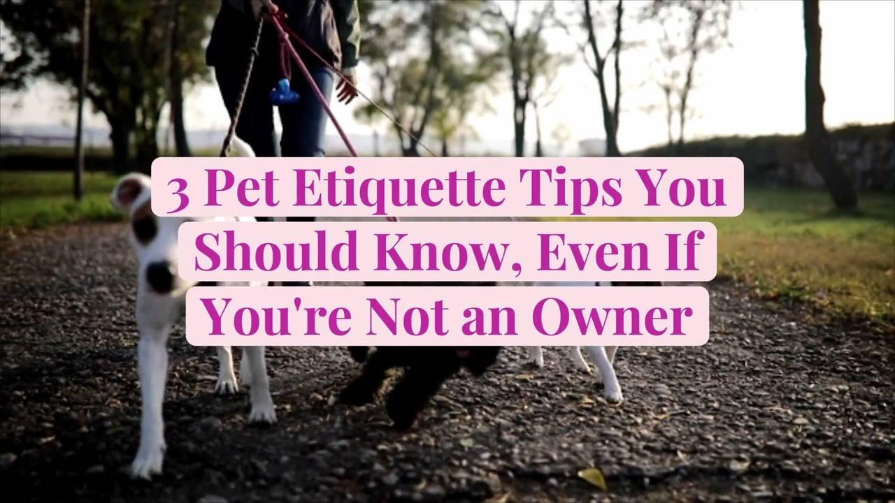 3 Pet Etiquette Tips You Should Know, Even If You're Not an Owner