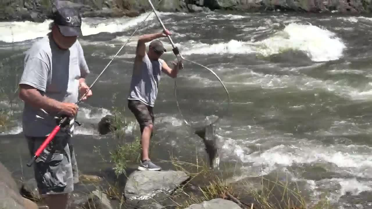 Anglers have one more weekend to land a chinook salmon on the Little Salmon River