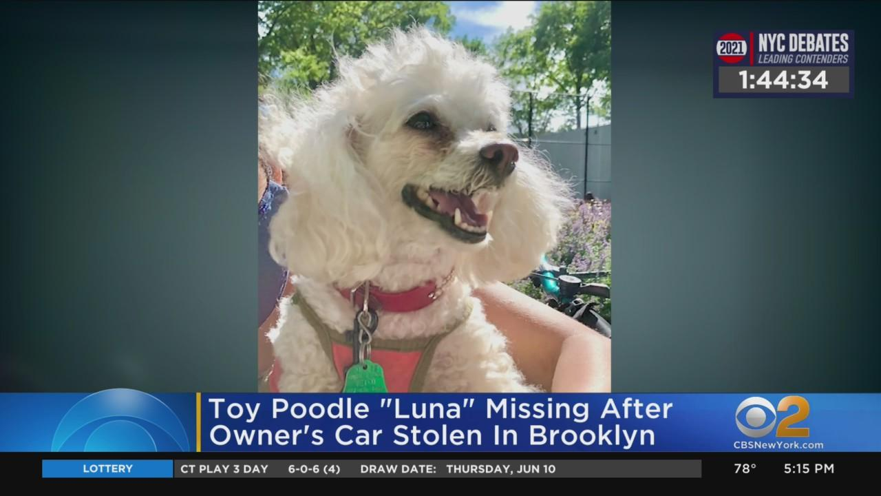 Search Continues For Brooklyn Woman's Dog That Went Missing With Stolen Car