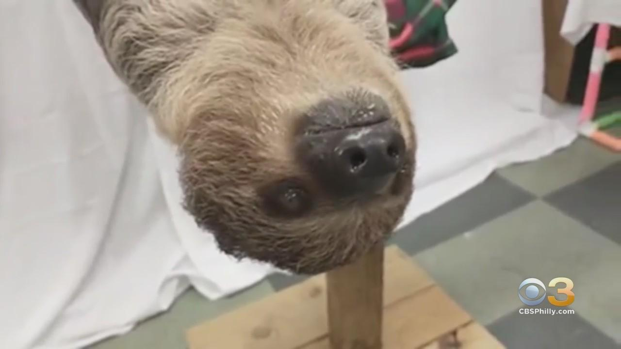 How You Can Feed Elmwood Park Zoo's Two-Toed Sloth
