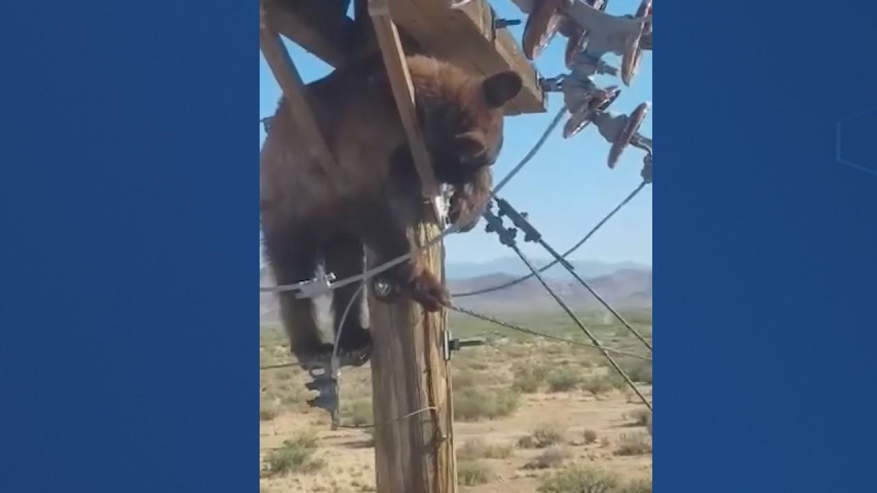 Bear gets stuck on top of power pole