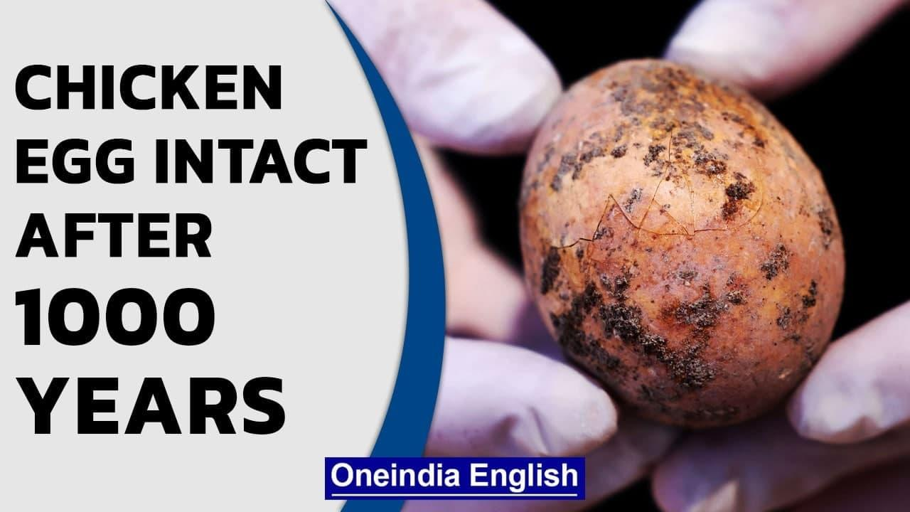 Israel: Chicken egg intact even after 1000 years in human faeces | Oneindia News