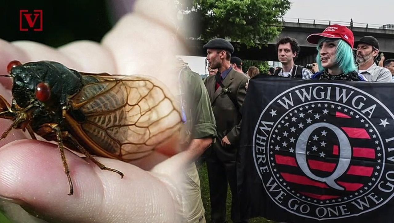 QAnon Believers Now Think the Cicada on President Biden's Neck Was a Secret Message