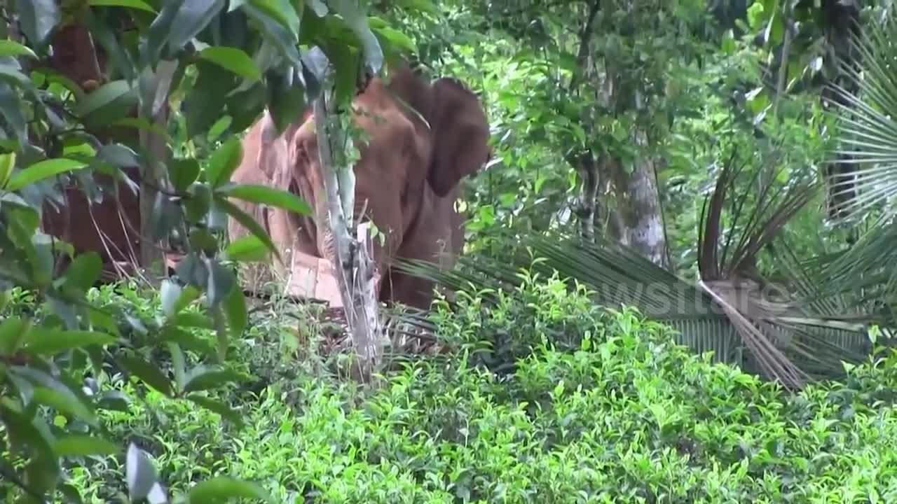 Wildlife officials chase away elephant after it leaves trail of destruction in Sri Lanka