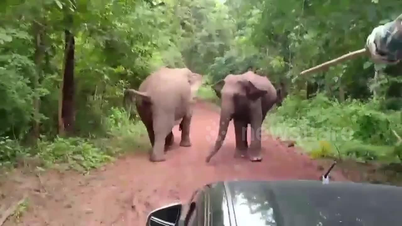 Park rangers come face-to-face with herd of wild elephants defending their territory in Thailand