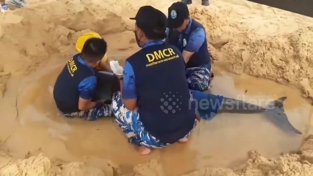 Female dolphin stuck on beach rescued in Thailand