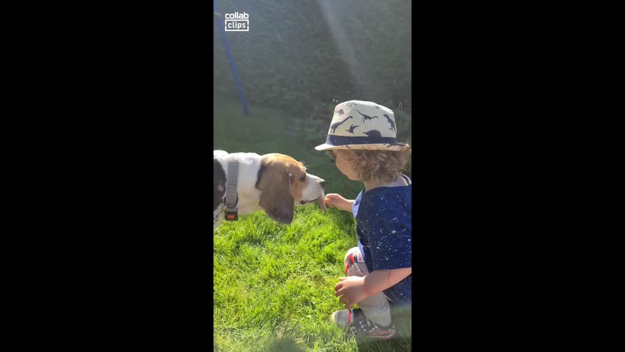 Man's best friend! Little boy, dog share ice cream from same spoon