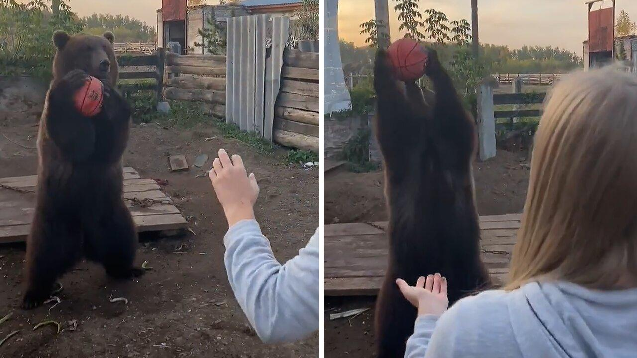 This bear loves to play basketball with her caretaker