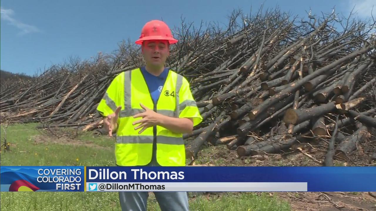 Cleaning Up Calwood, Boulder County Takes To The Sky To Heal Burn Scar