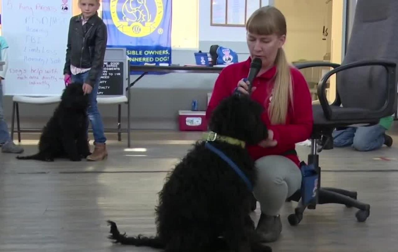 Service dog trainers from Ennis training dogs to help veterans and first responders