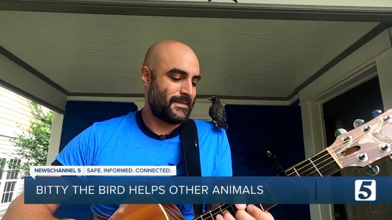 Bitty the bird lands on rescuer's shoulder as he plays guitar