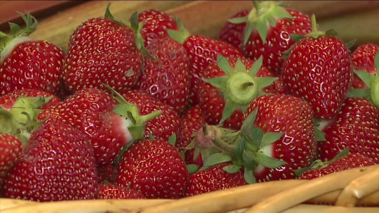 Northeast Ohio farmers say despite the rain, strawberries are ripe and ready for picking
