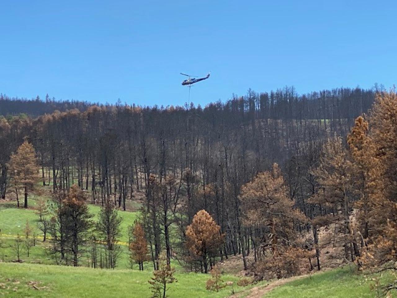 Ecologist: Intense fires like Calwood endanger regeneration prospects for ponderosa pine forest