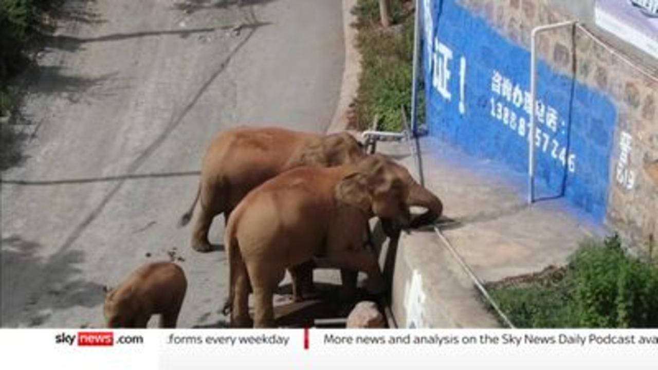 China: Elephants make epic 310 mile trek