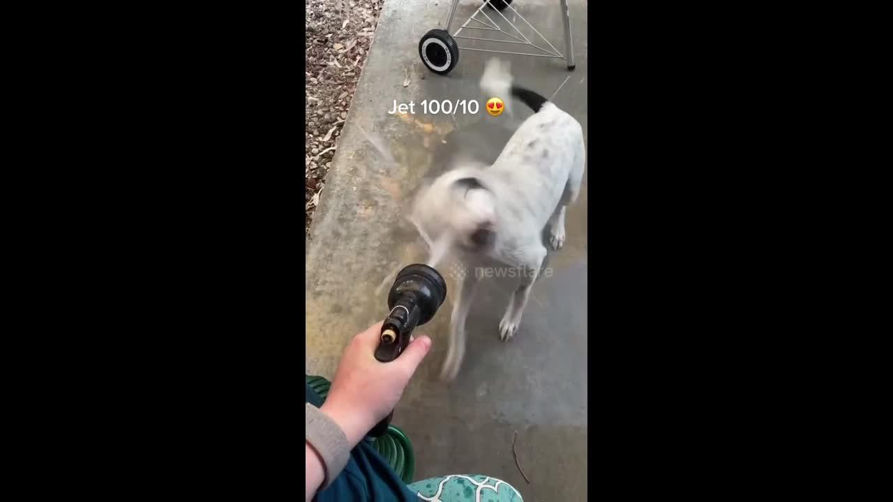 Tiktok puppy rates the water hose settings but may regret decision