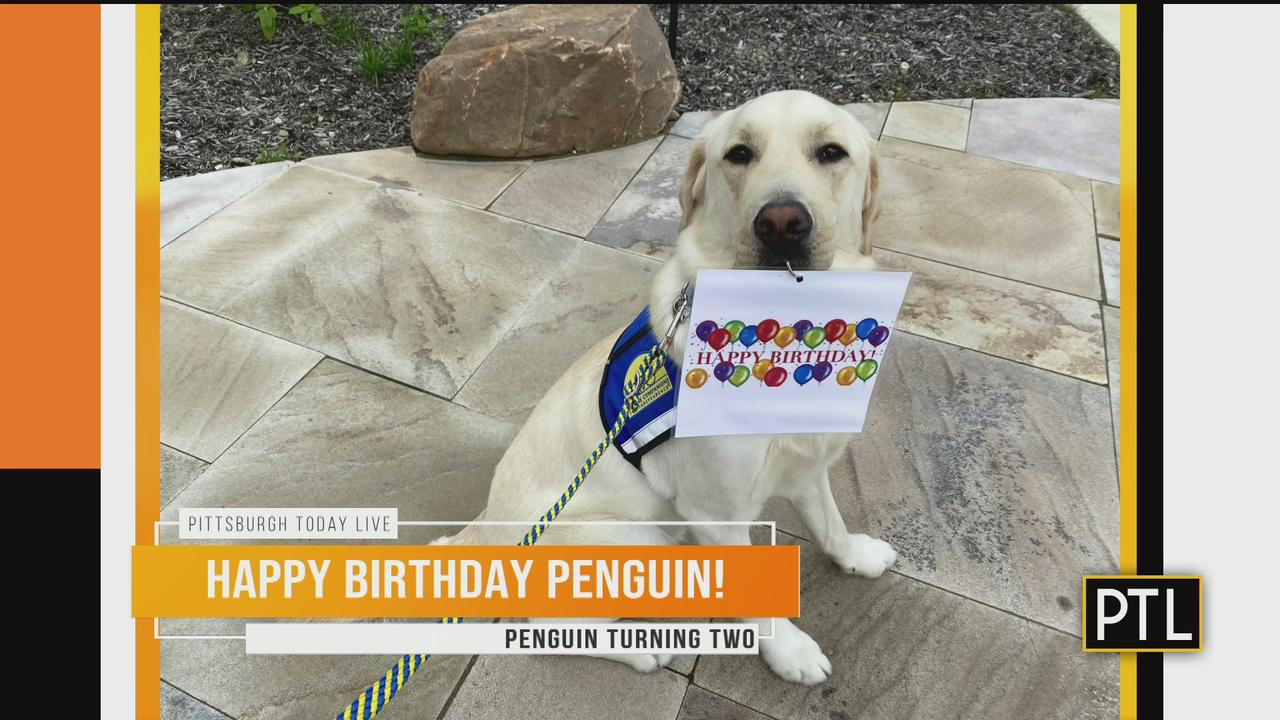Pittsburgh Today Live's First Pup Turns 2 Years Old
