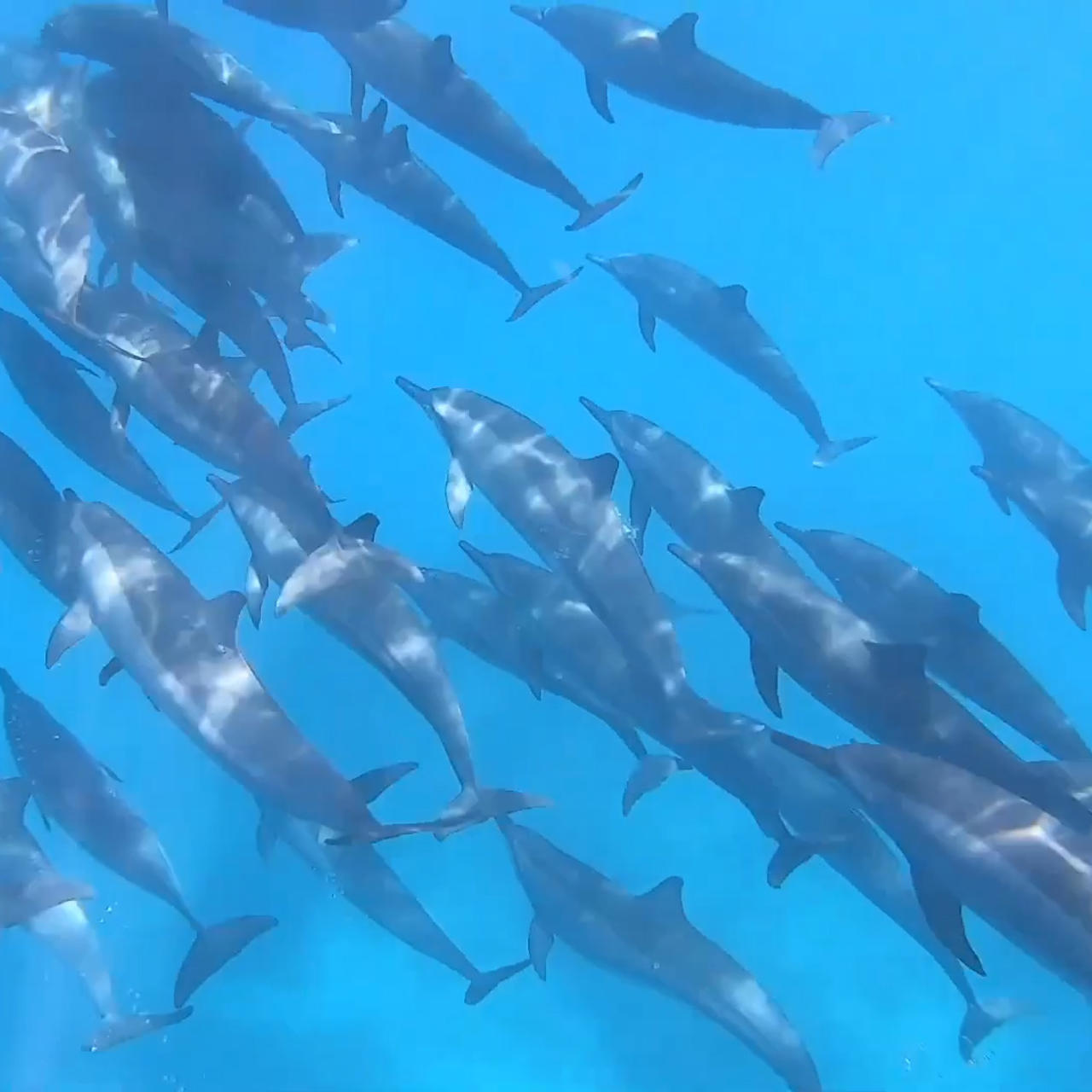 Photographer captures pod of dolphins singing underwater