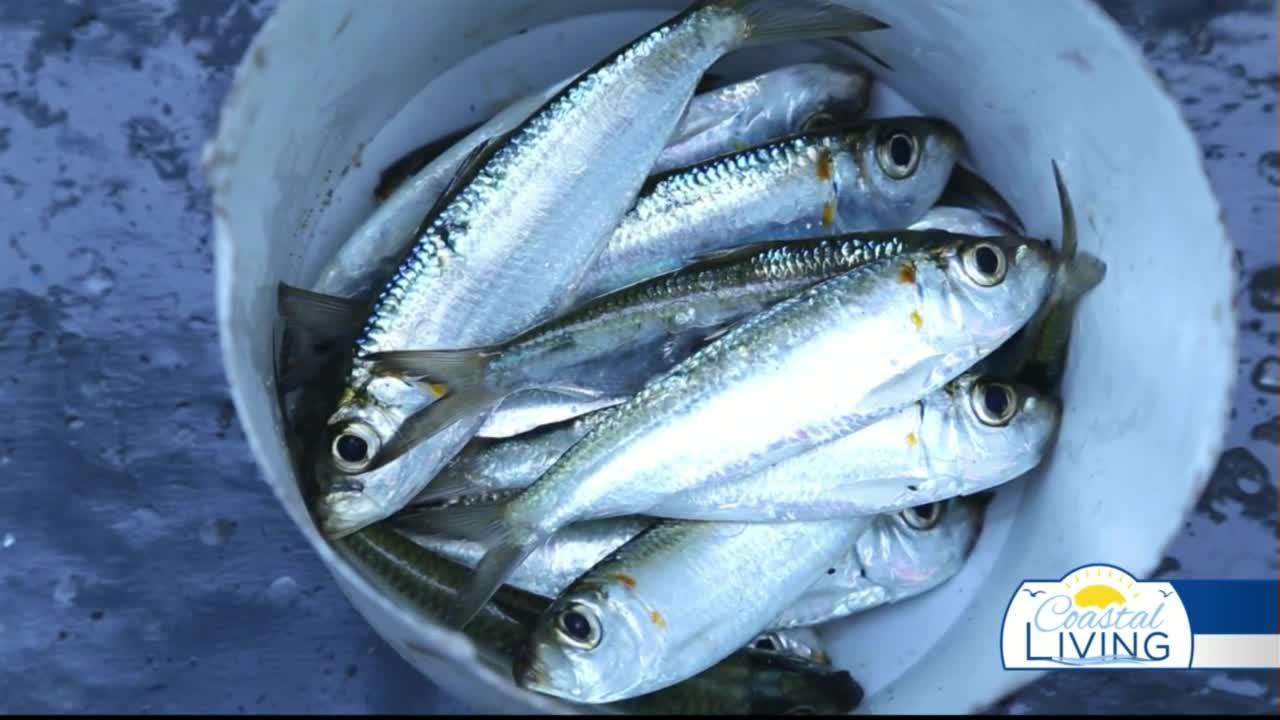 National Fishing & Boating Week: What Bait to Use While Out On the Water