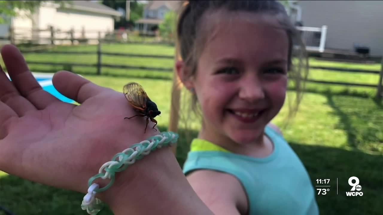 This Hamilton 9-year-old's cicada photo shoot is everything... and it's gone viral