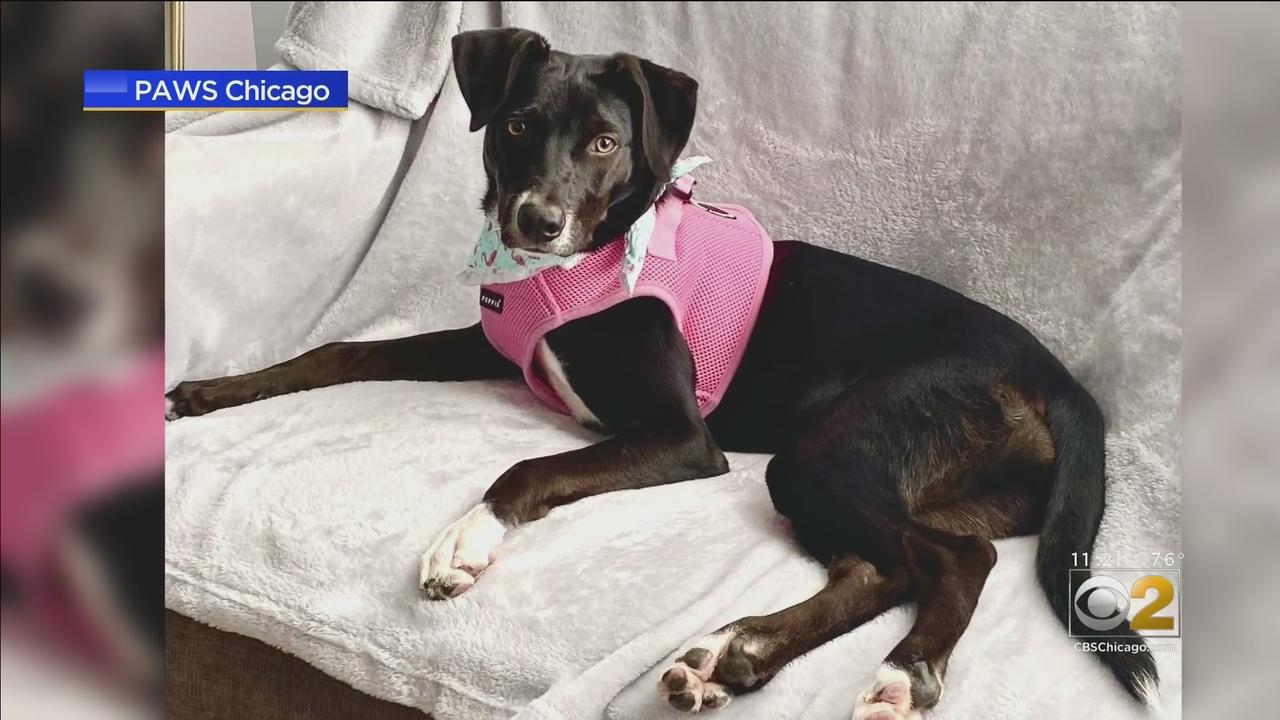 PAWS Pet Of The Week: Rhea