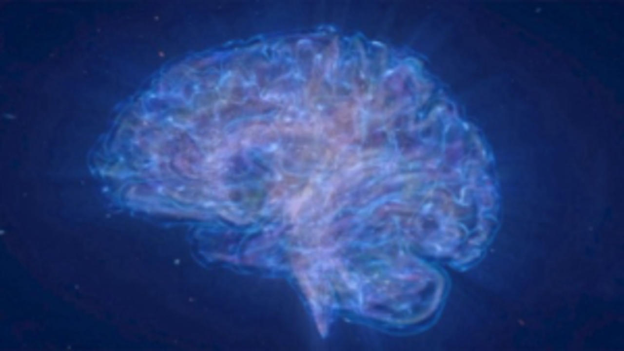 Is the Human Brain Similar to the Universe?