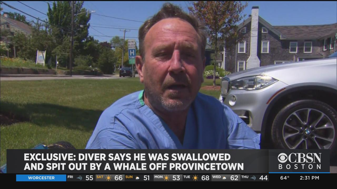 Diver Says He Was Swallowed By Whale Off Provincetown