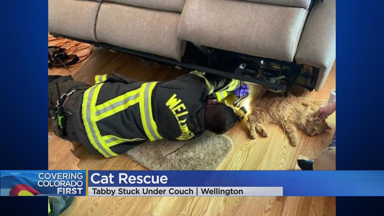 Wellington Fire Fighters Came To The Rescue Of A Tabby Cat That Became Stuck Under A Couch