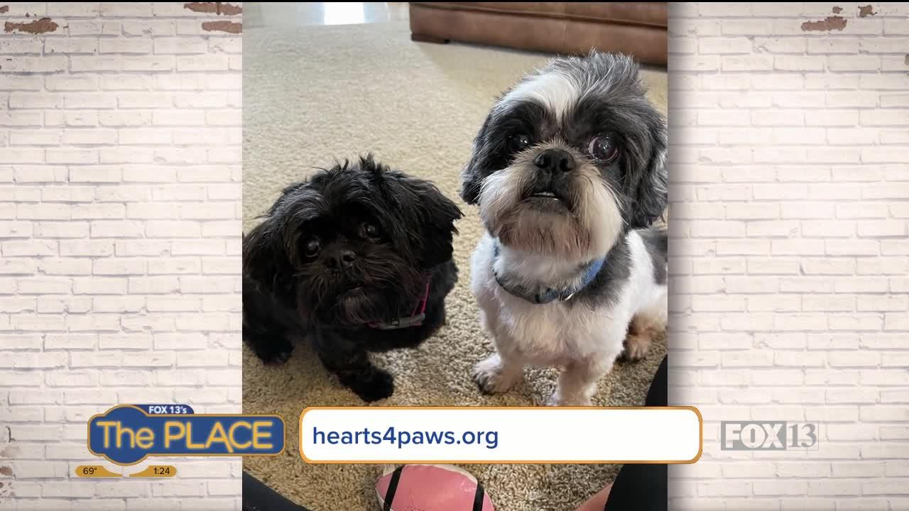 Let's find Sadie and Milo a home together!