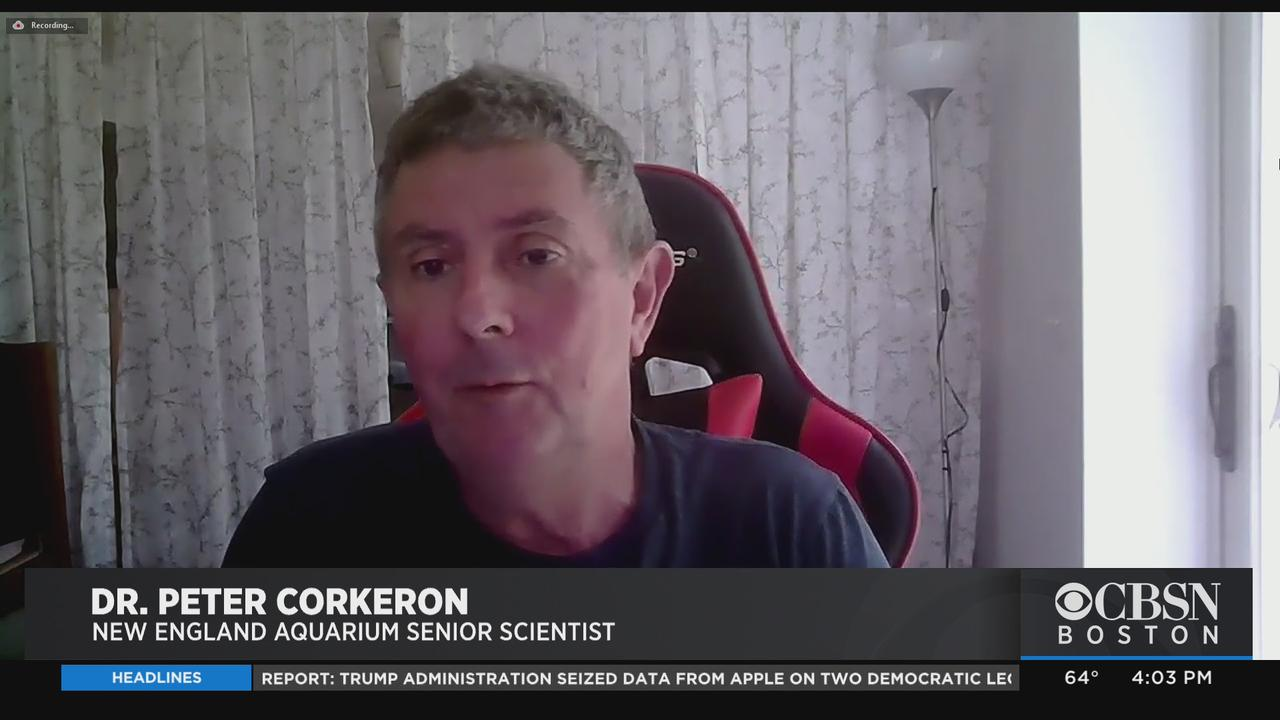 'A Very Unusual Accident': Dr. Peter Corkeron On Diver Nearly Swallowed By Whale