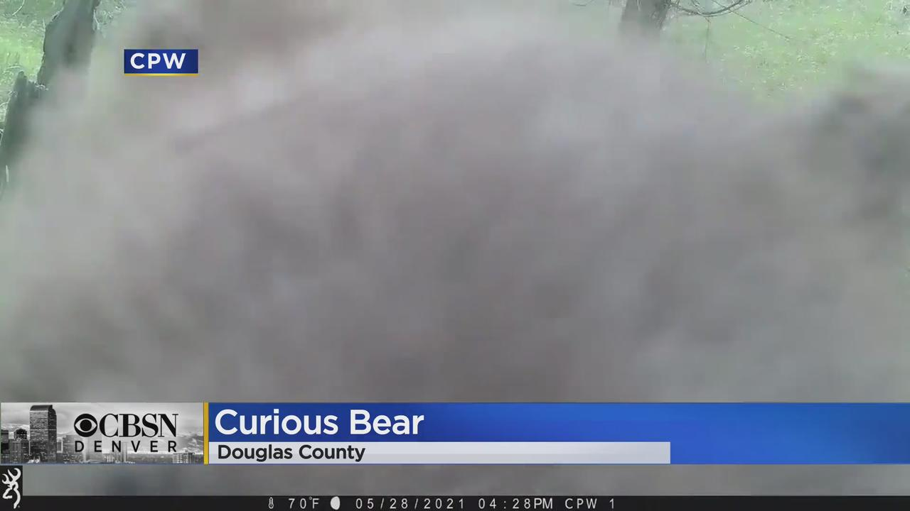 Bear Poses For 'Selfie' After Discovering Wildlife Camera