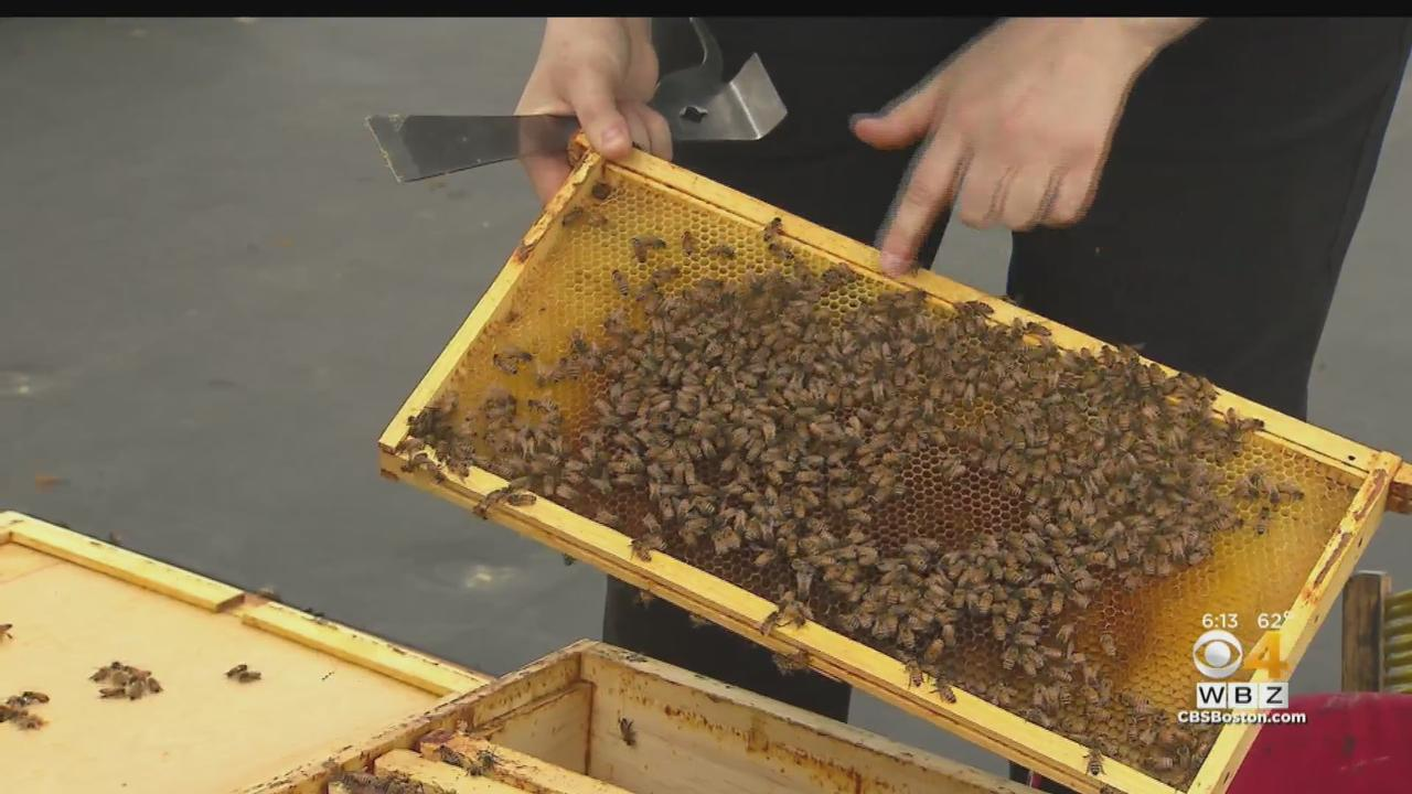 Beekeeping Has Become Popular In Boston Thanks To Pandemic