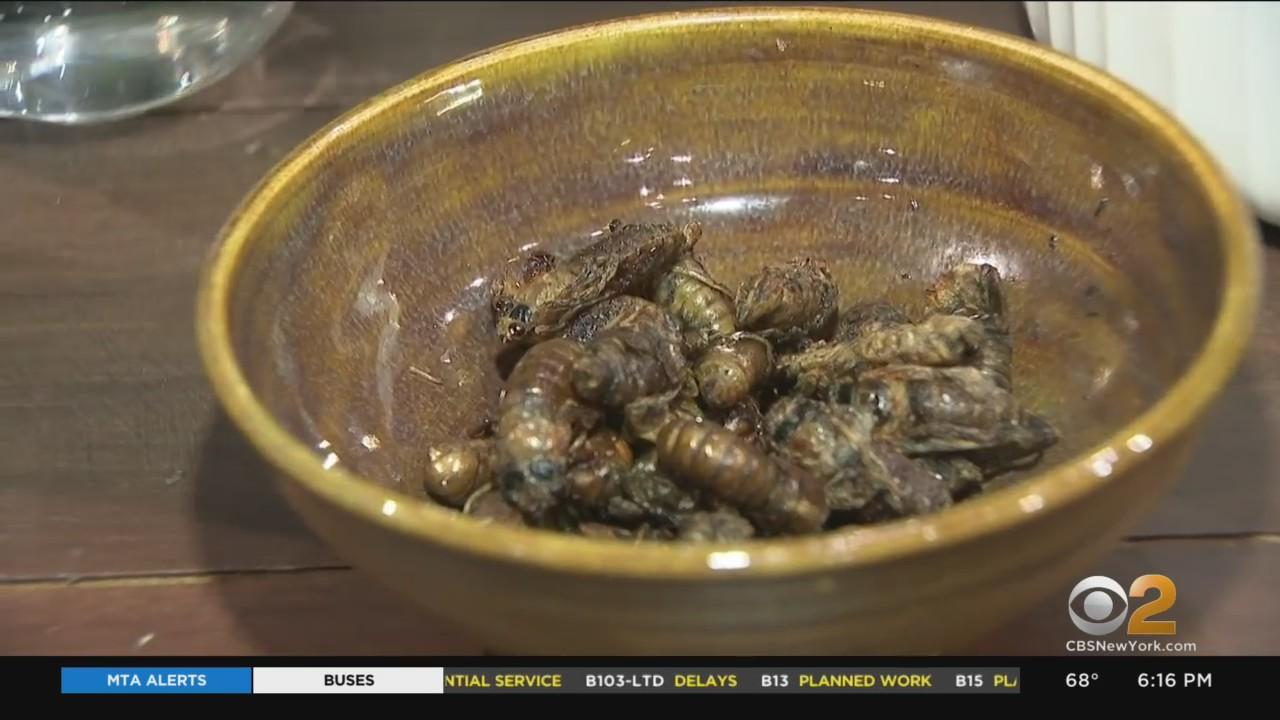 Snacking On Cicadas? CBS2's Jenna DeAngelis Finds Out What All The Buzz Is About
