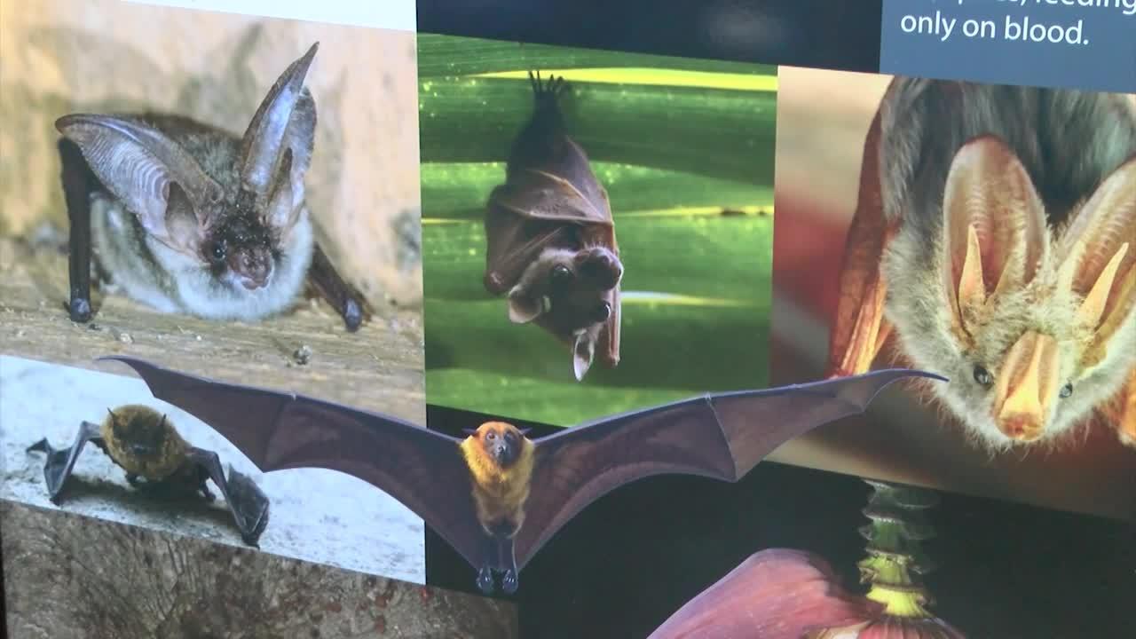 'Soar with Bats' makes world premiere at ExplorationWorks