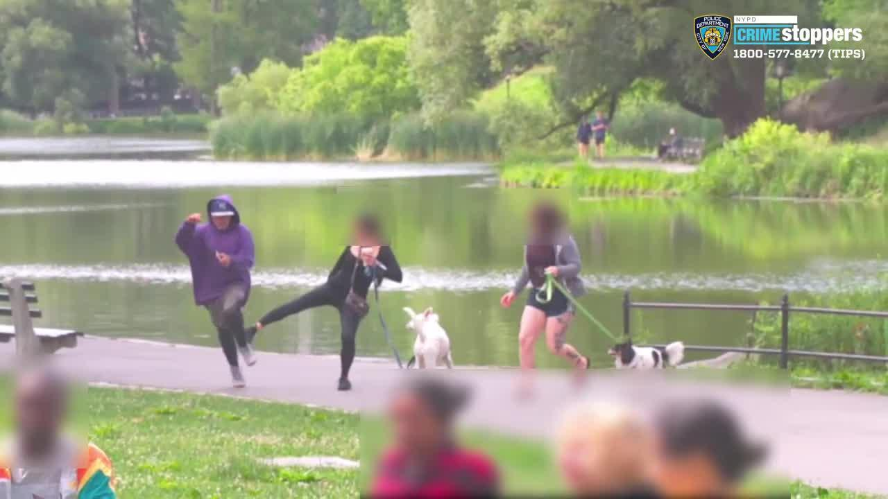 Caught On Camera: Man Punches Woman In Face After Stealing Phone In Central Park