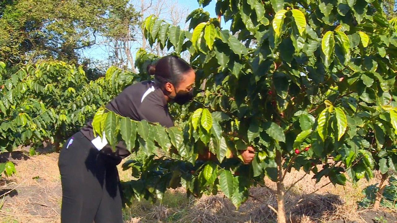 How climate change is helping South African coffee growers