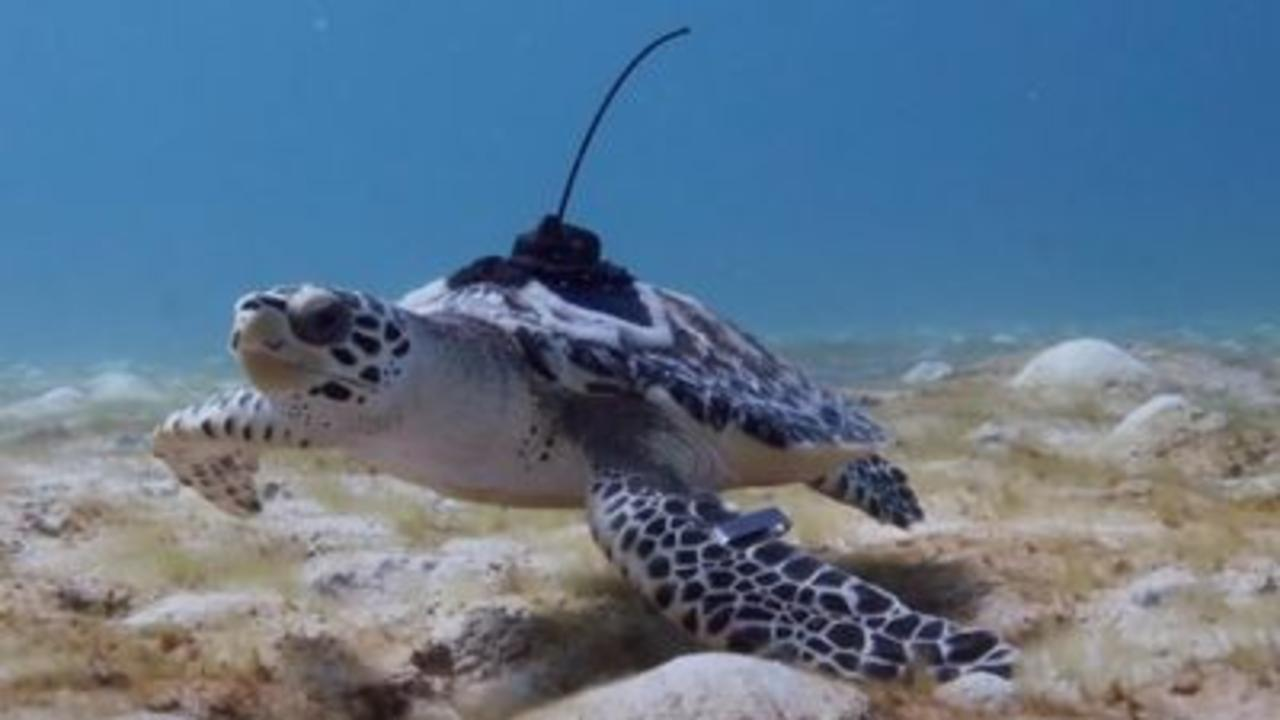 Turtles experience ocean for first time