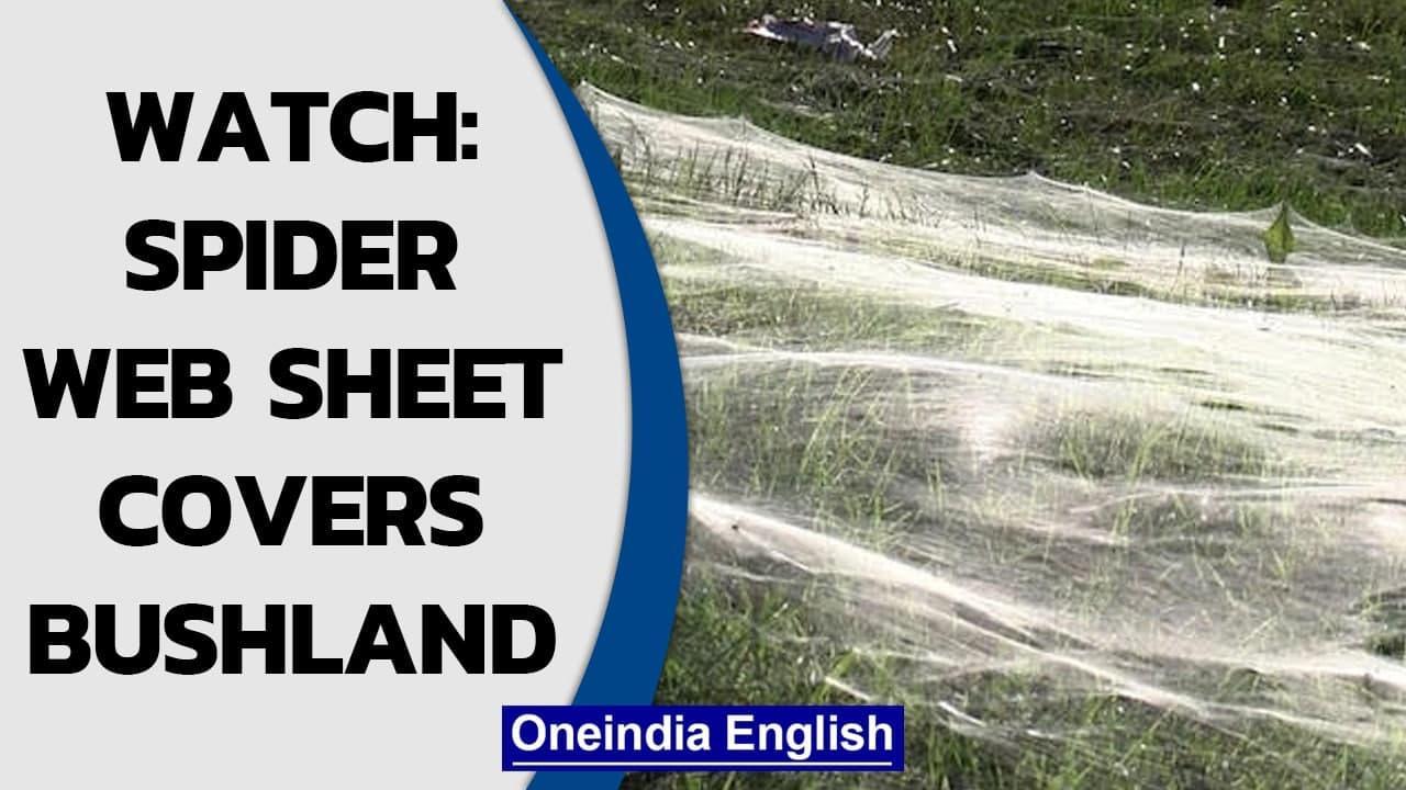 Massive spider web covers Australia's bushland in Gippsland region post-rain | Watch | Oneindia News