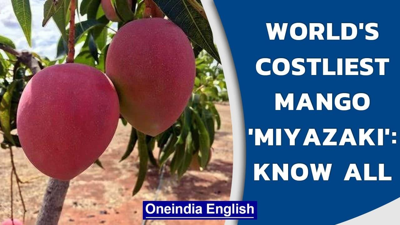 Miyazaki: World's costliest mango, sold at ₹2.70 lakh per Kg| Ruby-coloured mango | Oneindia News