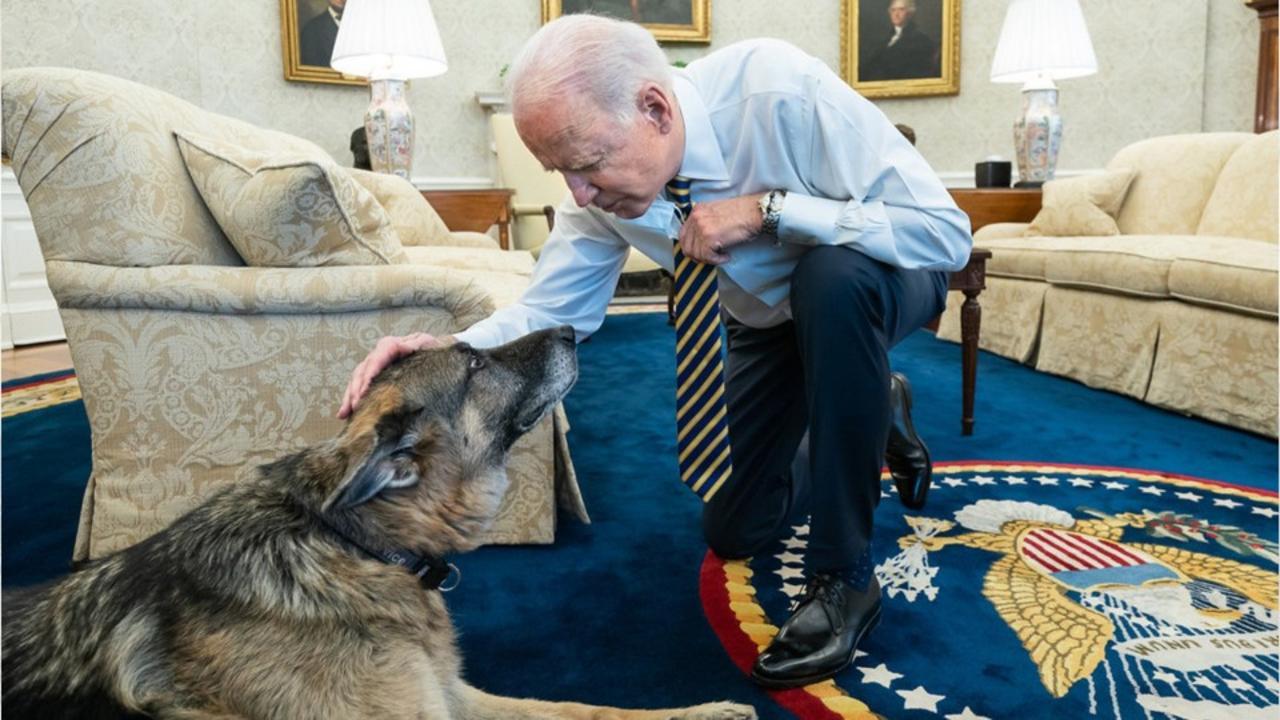 President Joe Biden's dog, Champ, dies at 13