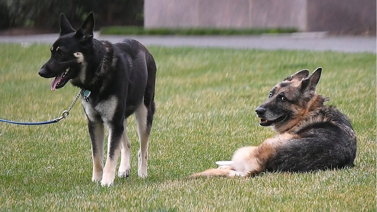 Biden family mourns the loss of their German Shepherd, Champ Biden, age 13 (1)