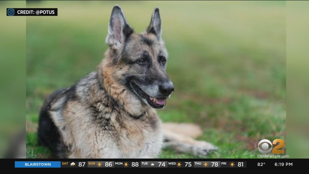 First Family's German Shepherd, Champ, Passes Away