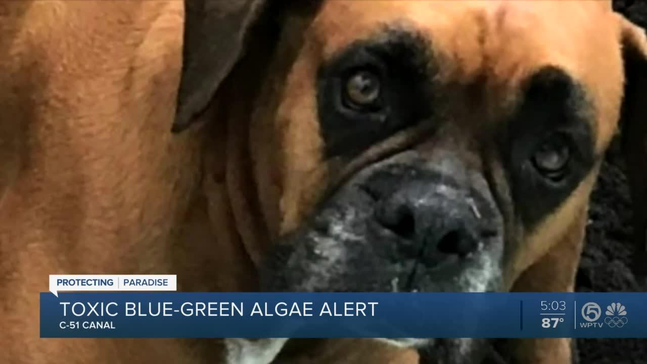 Pet owner says toxic algae in Palm Beach County claimed dog's life